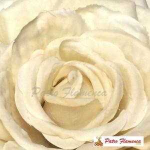 Flor Escarlata Señora